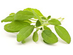 Fresh herbs wholesale from Israel with no agents or brokers grower-direct export supply all year long top quality and best prices