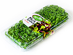 Microgreens micro-green Israel wholesale microherbs grower direct supply